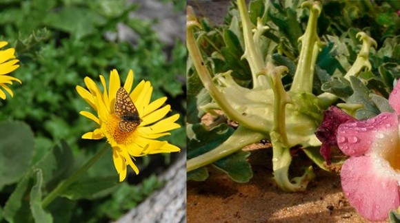 ARNICA AND DEVILS CLAW
