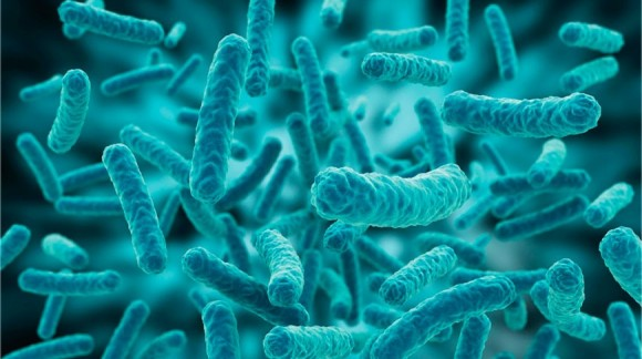 HOW INTESTINAL FLORA HELPS YOU